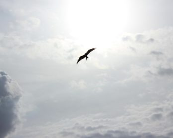 Let Go and Take Flight